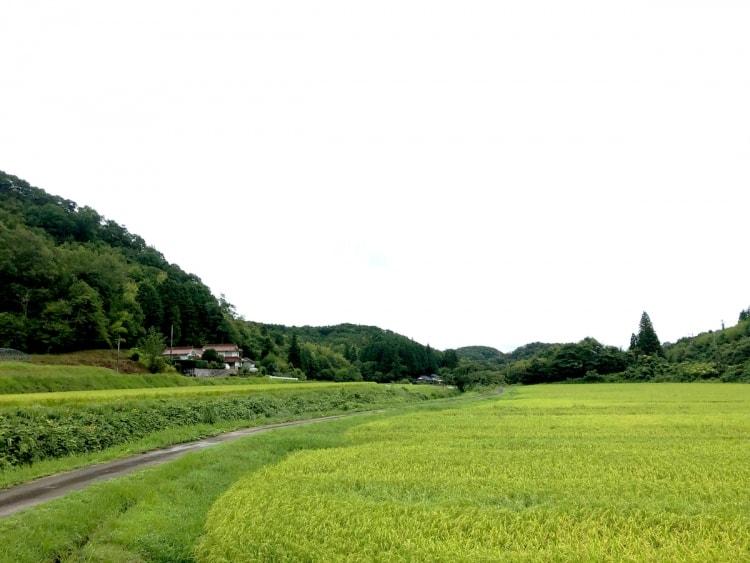 adf-web-magazine-kuramune-house