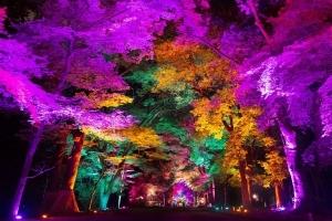 香川県高松で「チームラボ 栗林公園 光の祭」。栗林公園がインタラクティブな光のアート空間に。