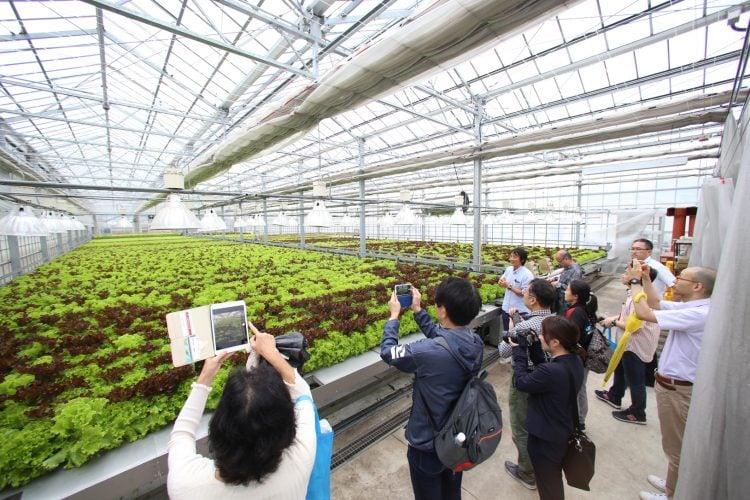 adf-web-magazine-gyaku-sankin-koutai-aso-vegetablefactory