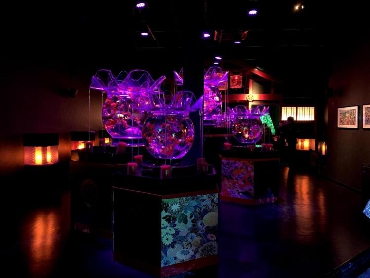 adf-web-magazine-art aquarium museum-valentina cannava-09