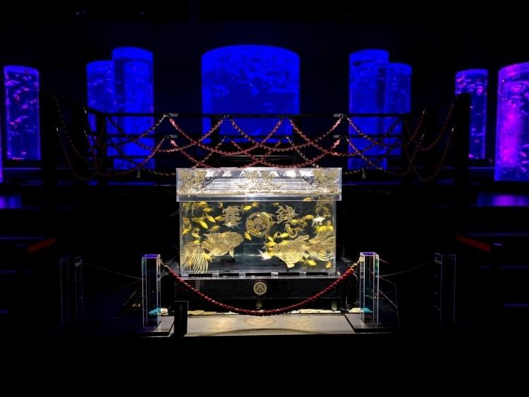 adf-web-magazine-art aquarium museum-valentina cannava-16
