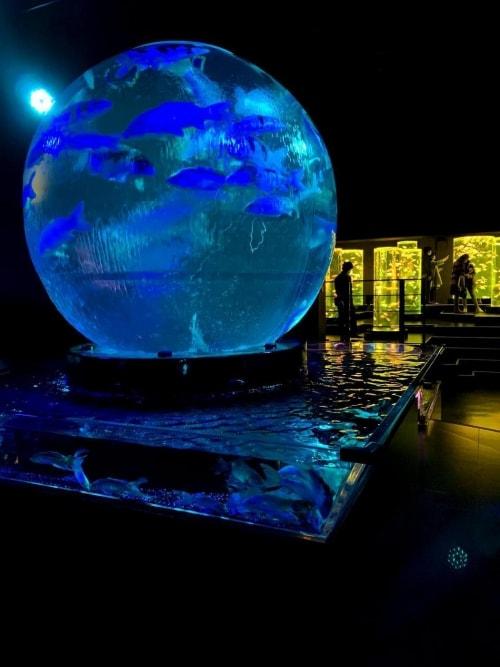 adf-web-magazine-art_aquarium_museum-valentina-cannava-15