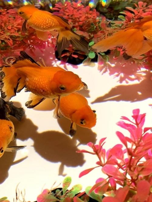 adf-web-magazine-art_aquarium_museum-valentina-cannava-19