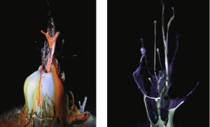 アーティスト土佐尚子の新作NFTアート映像作品《Sound of Ikebana:音のいけばな》がオークションへ出品