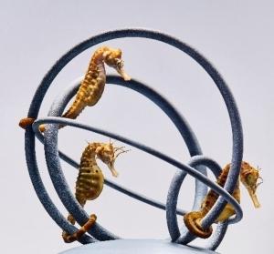 SUMIDA AQUARIUM starts special exhibition focusing on the life of small sea creatures