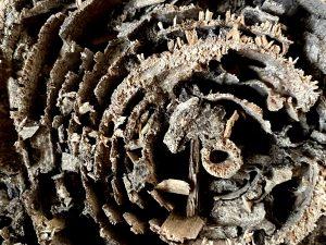 古民家での暮らしVOL.11:  日本の木造住宅とシロアリ