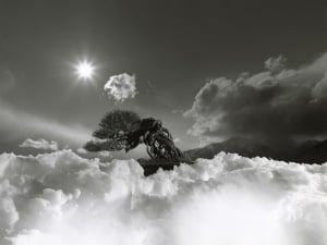 山本昌男 個展「手中一滴/YAMAMOTO Masao BONSAI - Microcosms Macrocosms」|銀座 蔦屋書店